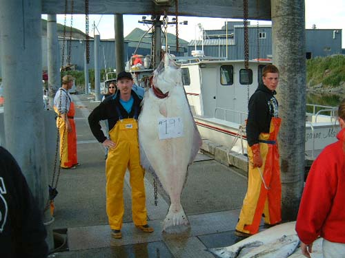 Dutch harbor alaska halibut for Alaska halibut fishing season